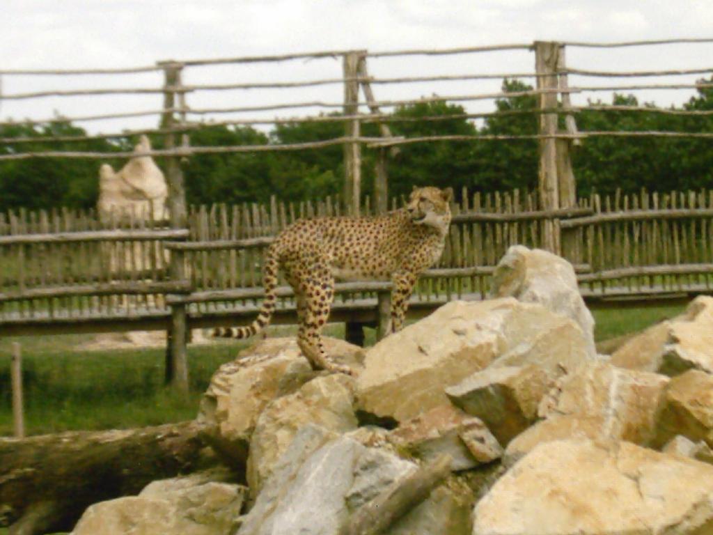 Cheetah 7 by Lena-Panthera