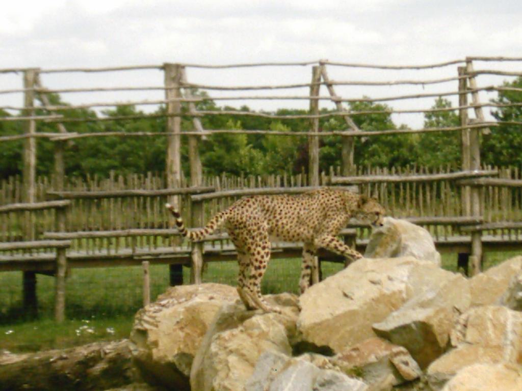 Cheetah 8 by Lena-Panthera