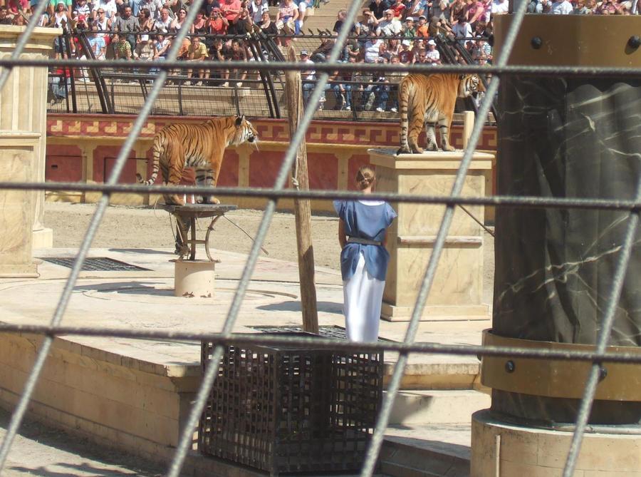TIGRE - panthera tigris - Page 5 Tigres_au_puy_du_fou_by_lena_panthera-d27g3iy