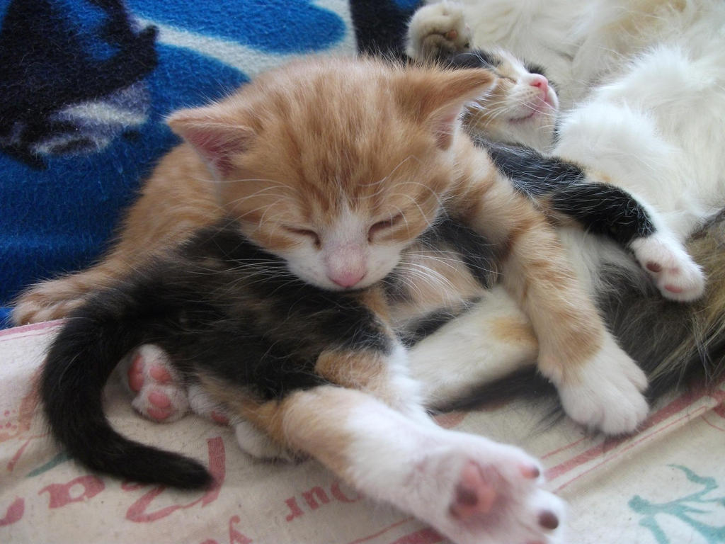 Row of sleeping kittens - GIF on Imgur