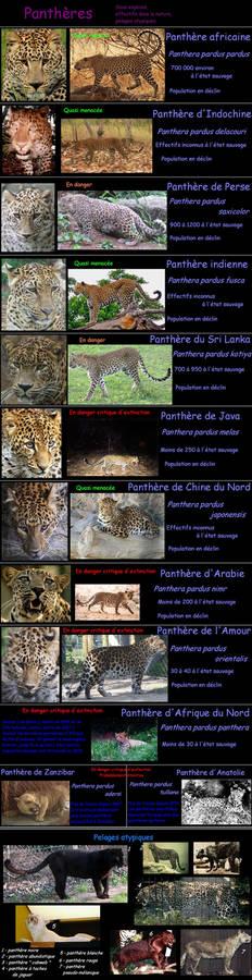 Leopard - subspecies, colors
