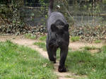 2014 - Black leopard 4