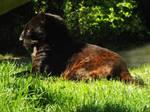 2014 - Black leopard 30