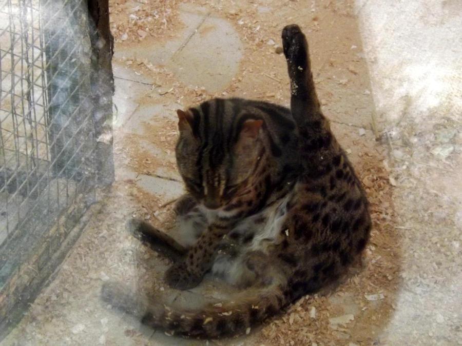 Milky cat milky cat vomit fetish