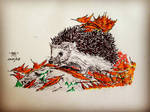 European Hedgehog by unknown3173
