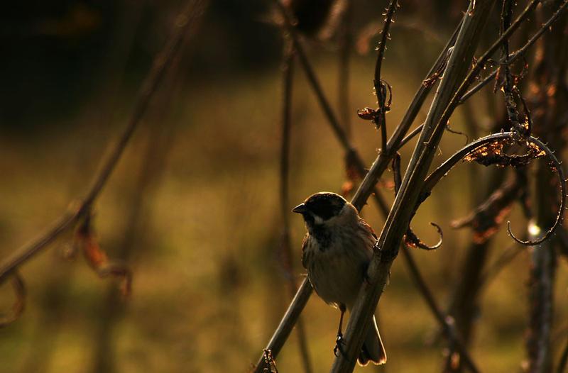 Sunset Bird by spitfire900