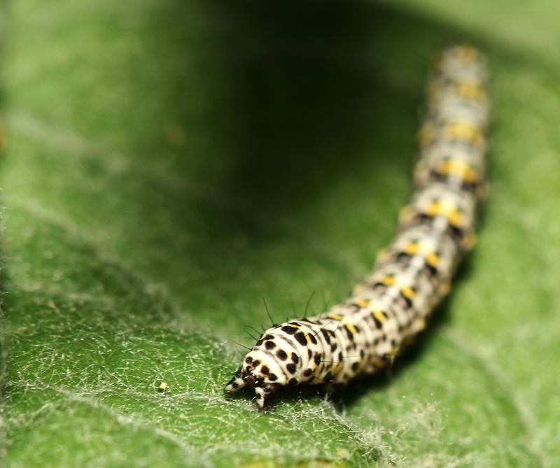 Caterpillar by spitfire900