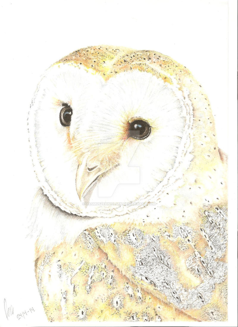 Barn owl! by RasmusZehNielsen