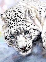 Snow Leopard Closeup by ZhaoT