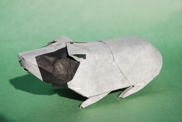Panda, guinea pig by Blue-Paper