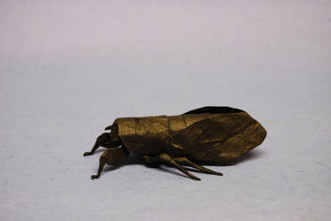 Cicada by Blue-Paper