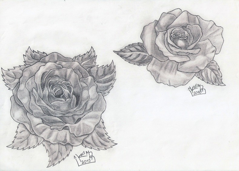 Gallery For &gt 3 Rose Tattoo Sketch