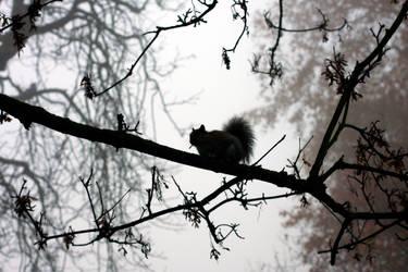 Grey Squirrel by Smillerr