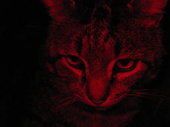 Cat ahhhh! by Smillerr