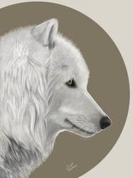 White Wolf Atka by ZireaelArt