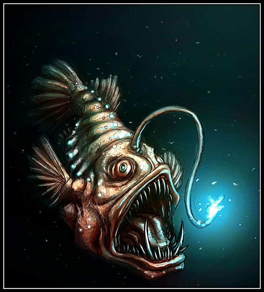 1000 images about angler fish on pinterest for What is an angler fish