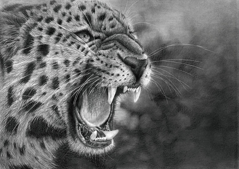 Leopard Pencil Drawings Leopard by Bengtern Leopard by