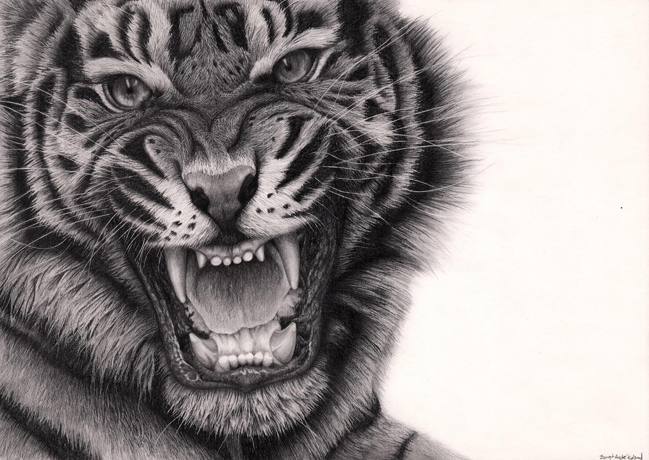 Tiger Roar by Bengtern on DeviantArt