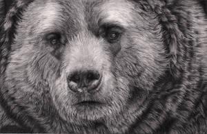 Bear by Bengtern