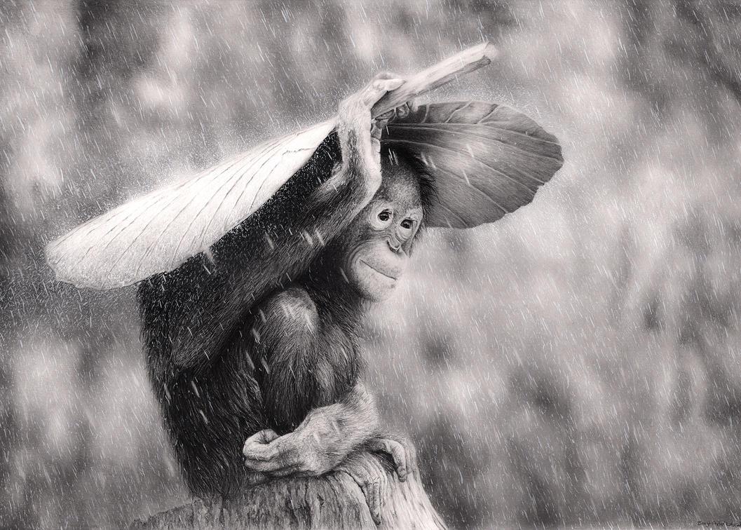 Orangutan in The Rain by Bengtern