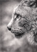 Lynx by Bengtern