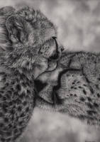 Cheetahs by Bengtern