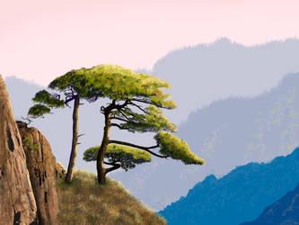 Pine tree on Huangshan Mountain