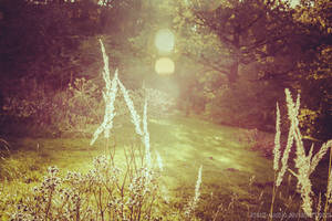 Sunny October by 2ravens