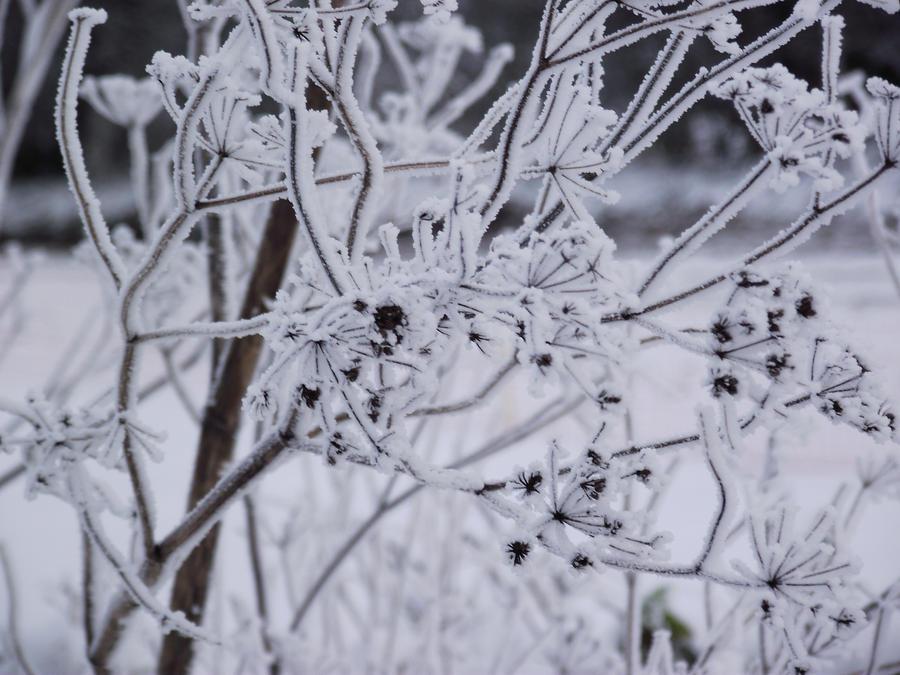 It's winter by walnutman