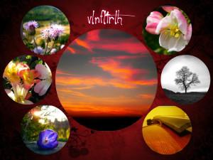 vlnfltrlh's Profile Picture