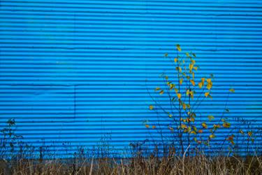 Linear Blue, Organic Yellow