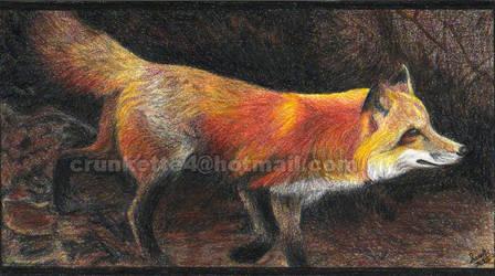 Fox 1 by SarahFriesen