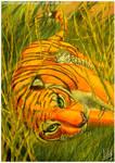 Jungle nap