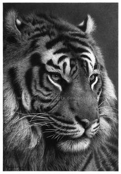 I, Tiger