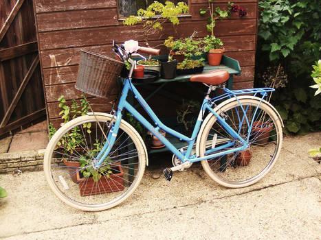 Blue Beauty - Pendleton Somerby