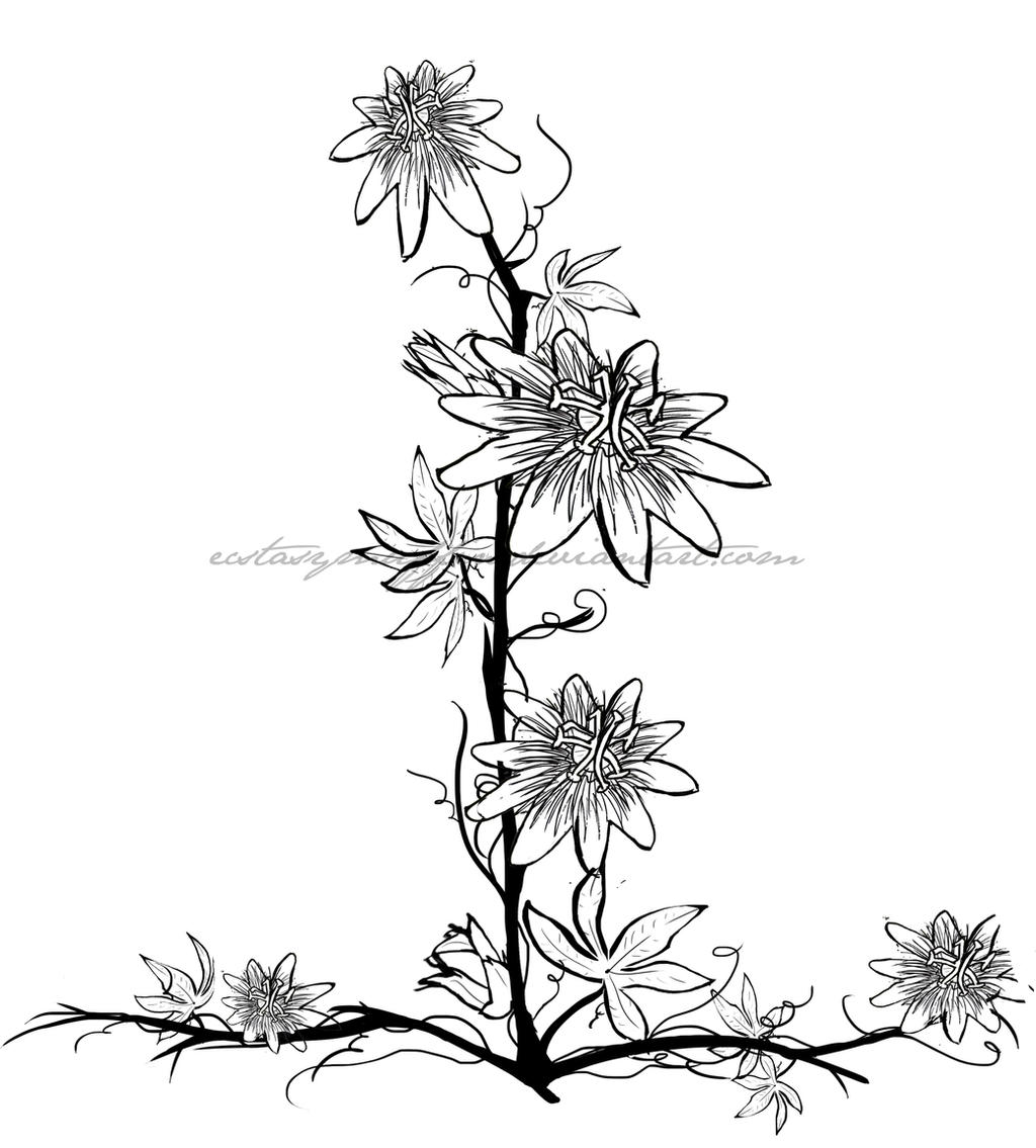 Passion Flower Line Drawing :