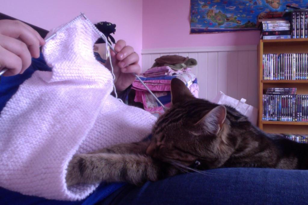 Knitting and napping by InfiniteNosferatu