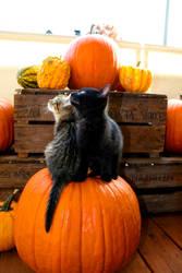 halloween - stock.