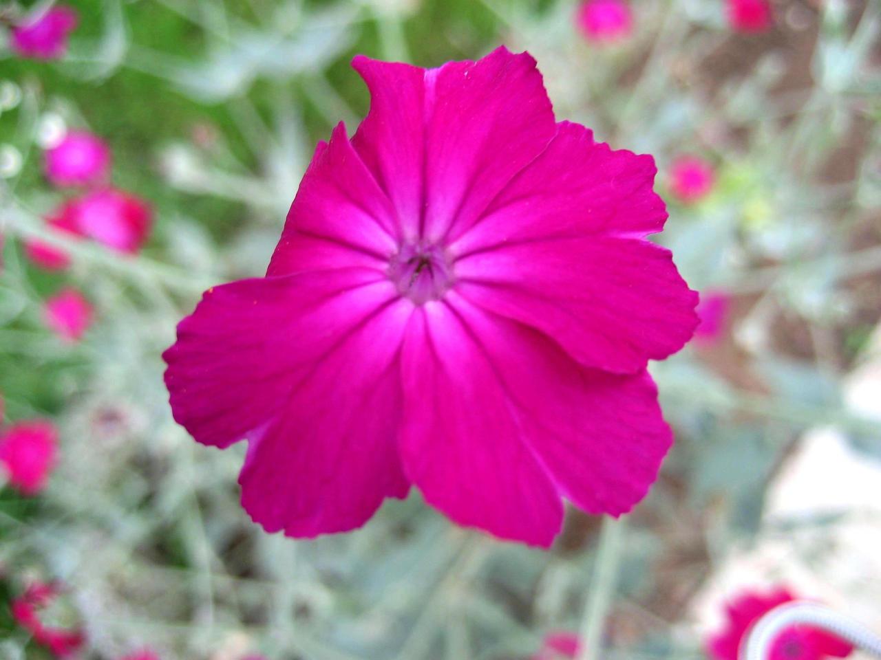 Purple Flower by hilton on DeviantArt