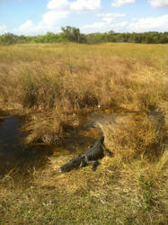 Chillin' in the Everglades