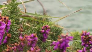 Coastal Flowers by Tabanoffi