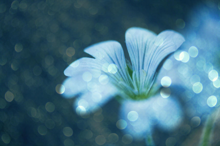 Cool Colors Maeveampquinn Pinterest Bokeh And Photoshop