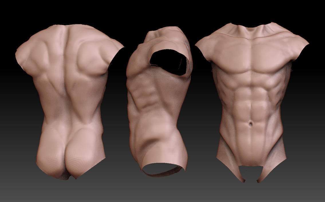 Anatomy - Torso Study by GastonBR on DeviantArt