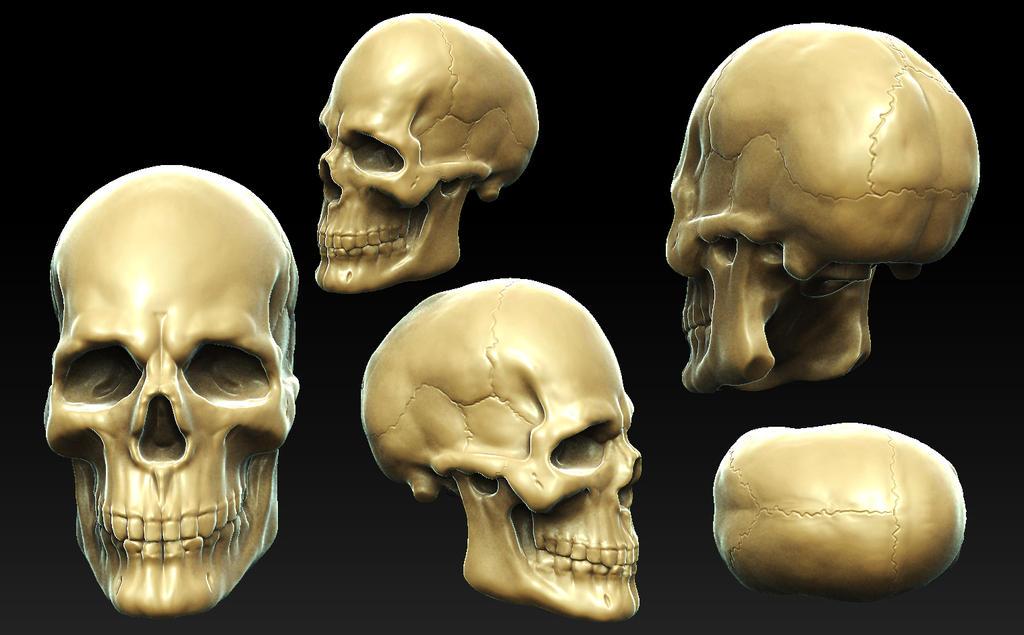 Skull Anatomy Study by GastonBR on DeviantArt