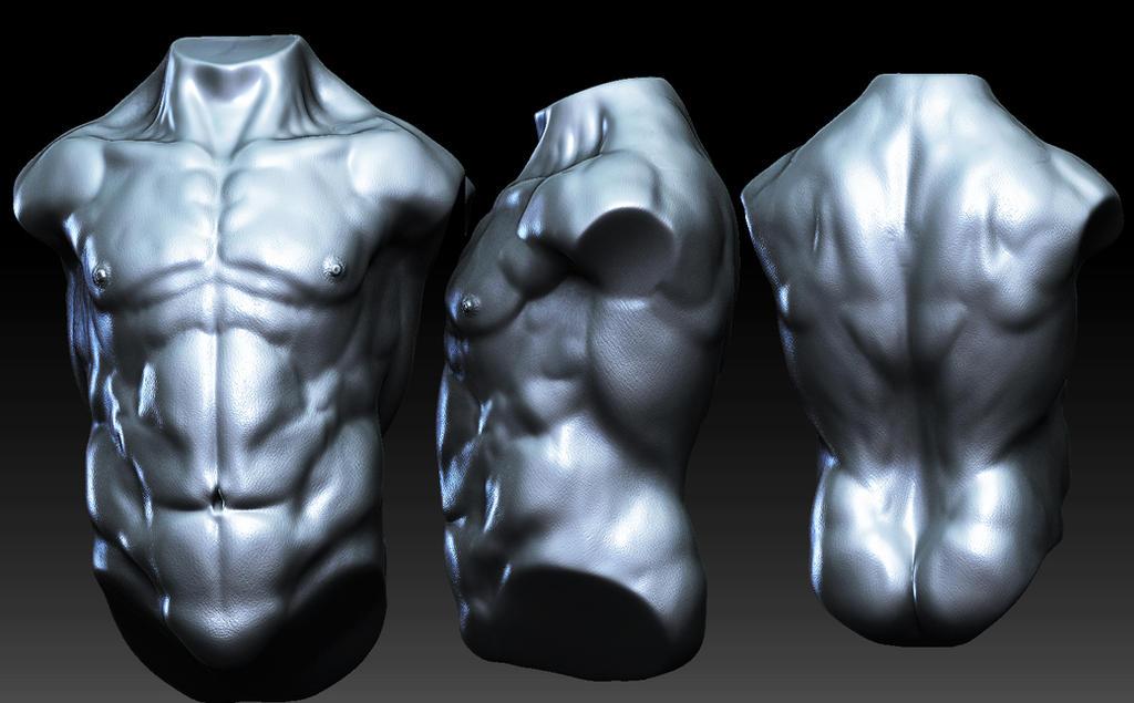 Anatomy Study Torso by GastonBR