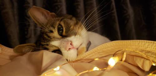 candid kitten