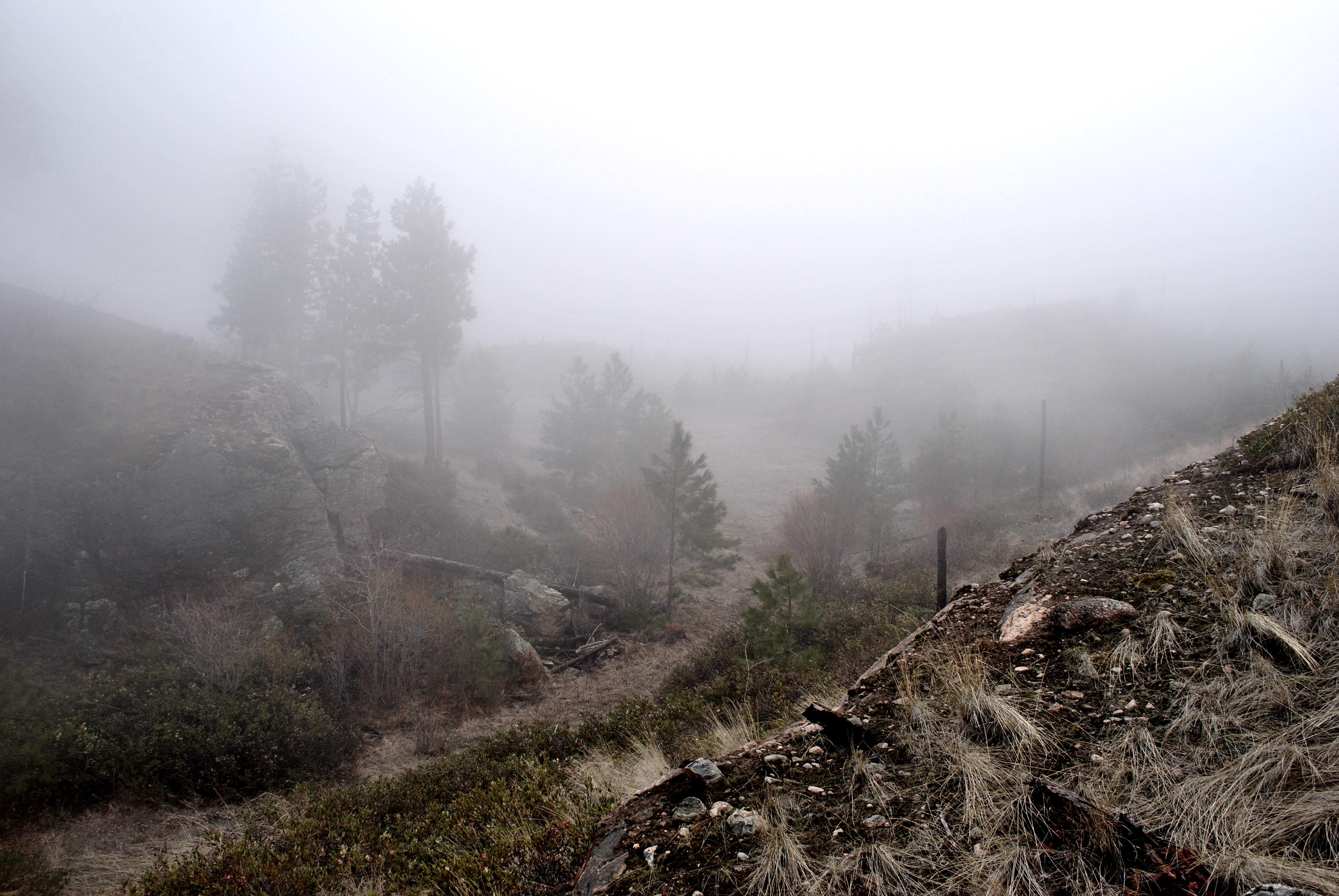Fog Stock