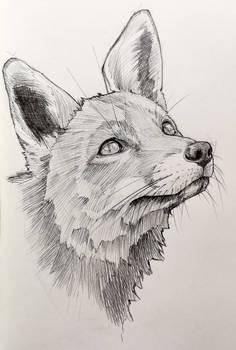 12021-07-09 Fox