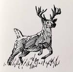 12021-08-14 Deer