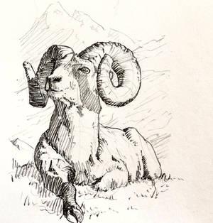 12021-09-03 Goat